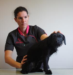 ostéopathie clinique vétérinaire du Cèdre la roche sur yon